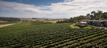 The Best Yarra Valley Wineries and Cellar Doors